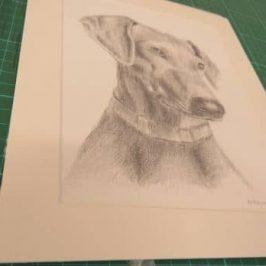 Portret hond in opdracht getekend met potlood