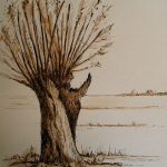 in de polder knotwilg