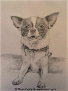 dieren portretten