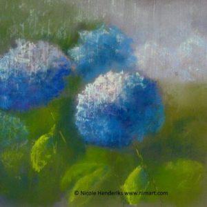 bloemen hortensias